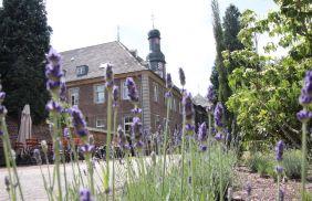 kloster_lavendel